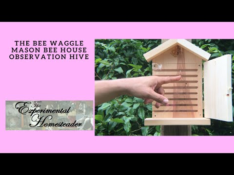 The Bees Waggle Mason Bee House Observation Hive