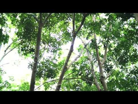 Ladyboys - Jungle Unchained video