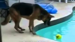 Mix De Videos De Risa De Animales Caidas Accidentes Fails Golpes Trompazos