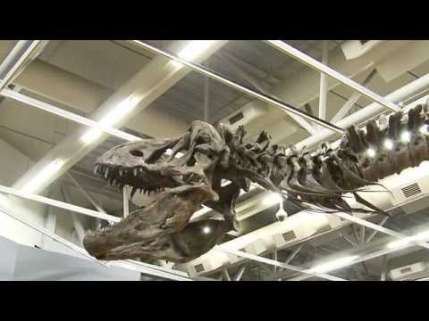 Behind the Scenes: Building a T. rex at Te Papa