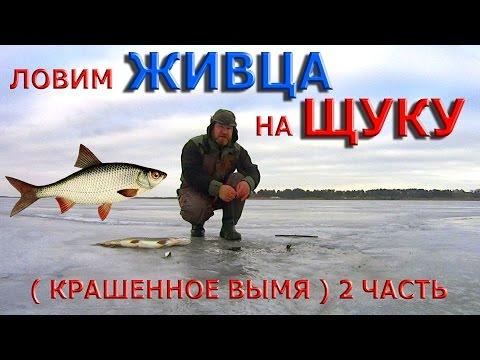 как покрасить вымя на рыбалку