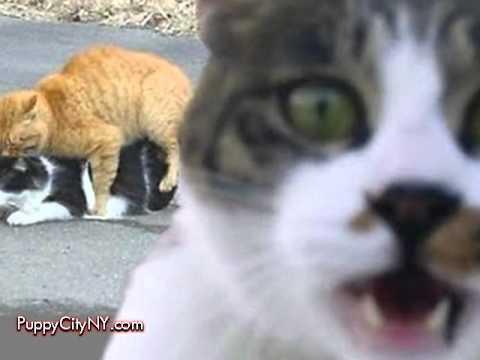 Photobomb Pictures Animals Photobomb Animals
