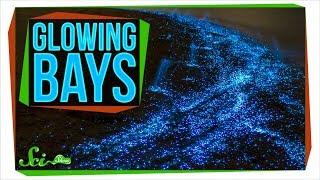 The Secret Behind Bioluminescent Bays