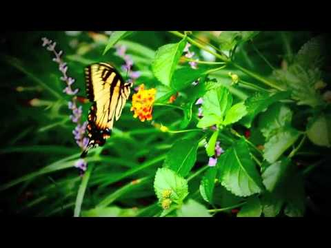 Oh Butterfly.m4v video