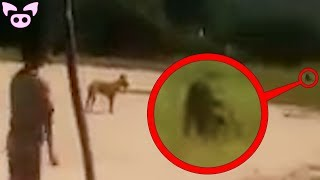 Mysterious Videos You Should Not Watch Alone