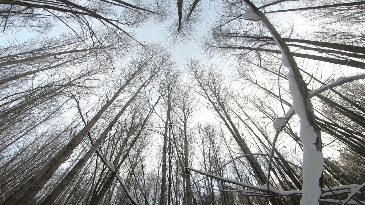 Walking in the abandoned forest (Deep snow) POV
