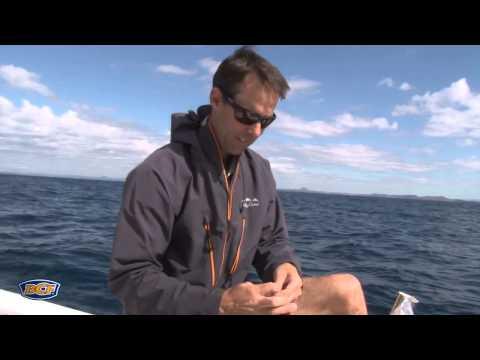 Chasing Mackerel