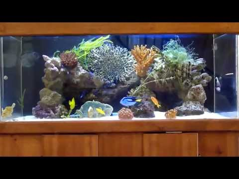 Wide 100 gallons saltwater marine FOWLR aquarium with emperor angelfish and tangs