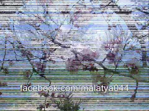 Mehmet Balaman - Kayısılar Çiçeklenir