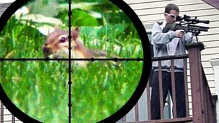 Chipmunk Pest Control [Air Rifle Hunting] (June 25, 2011)