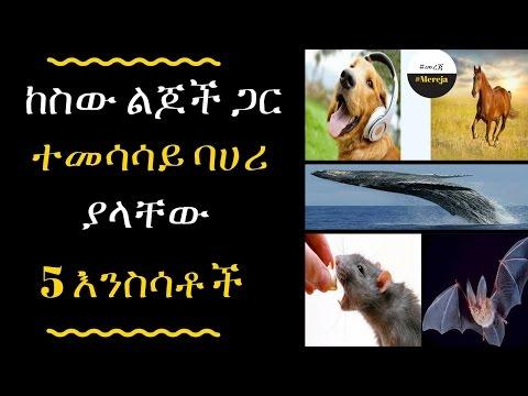 Top 5 Animals that Exhibit Human Behavioral Traits