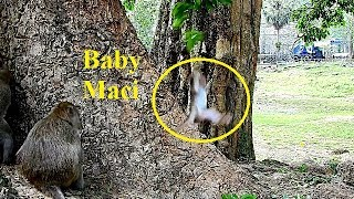 OMG! Baby Maci Fall Down From High Place of Tree - Mom Merry Try To Help But SO Late