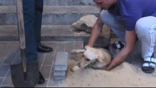 Pregnant dog entombed alive under pavement, rescued by local residents in Russia