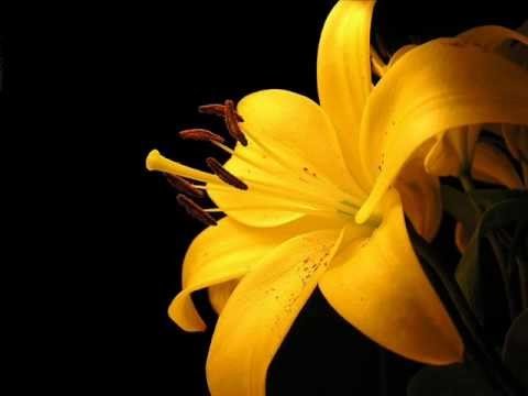 DEPECHE MODE -- liliana
