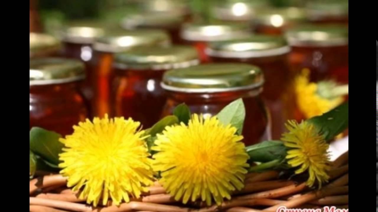Цветы одуванчика в народной медицинеы