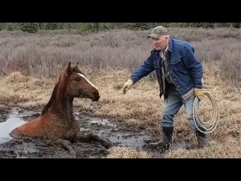馬が沼にすっぽりと……45分かけて救出 カナダ・アルバータ州/ボビー容疑者「暴力ふるってない」 妻への暴行容疑/住宅…他