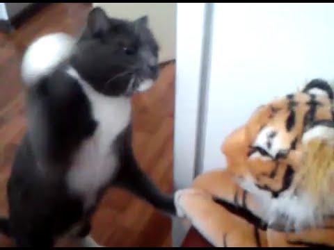 ボクサー顔負け!?トラの縫いぐるみが可哀想なほど猫パンチを連打する猫