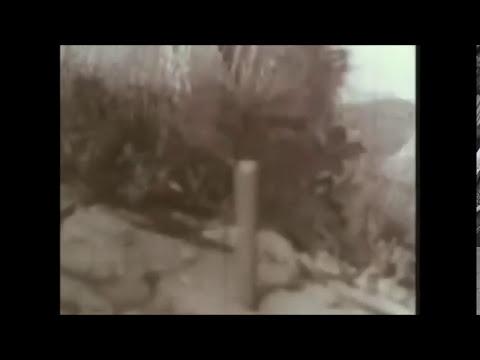 Filmaciones Combates Reales de la Segunda Guerra Mundial accidentes y pruevas de armamento