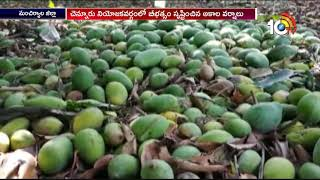 Unseasonal Rain Damages Crops in Mancherial  News
