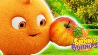 Dessin animé pour petit | Sunny Bunnies | LA POMME |  Cartoons drôles pour les enfants