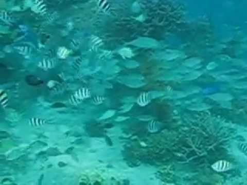 MAN-MADE CORAL GARDEN & ITS FISH DIVERSITY OF DUKA BAY MEDINA, MISAMIS ORIENTAL PHILIPPINES