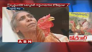 Beloved Pet Chicken behaves like a Dog   Peddapalli