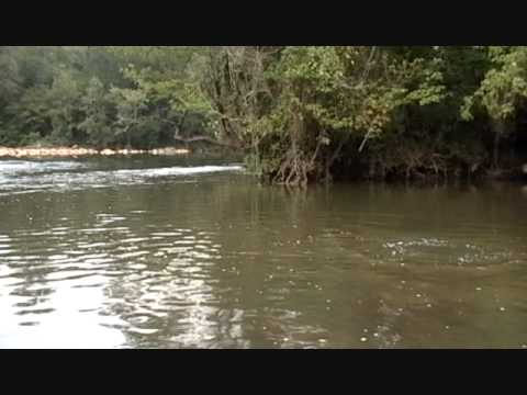 Fishing report - Fly Fishing the Haw River in August Video