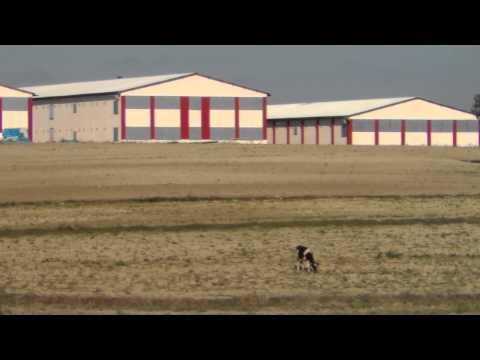Satılık tavuk çiftliği hazer emlak sakarya kaynarca tel 0546