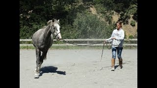 Lunging Part 4 - Principles of Straightness