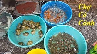 Tham quan chợ bán cá cảnh đẹp và rẻ nhất Việt Nam