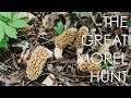 Morels: The Unofficial State Mushroom of Wisconsin