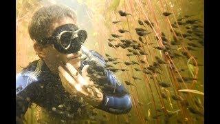 Diver Discovers Tadpole Paradise
