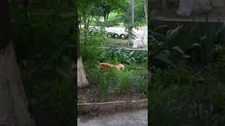 Кот говорит - Ой! Не надо!