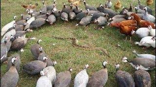 Um momento incrível de vida selvagem! ►► Águia, cobra, pássaro, Garça na água, lontra