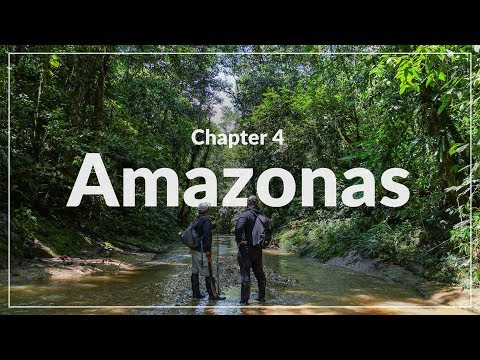 Weltreise Chapter 4 - Amazonas • Welcome to the Jungle