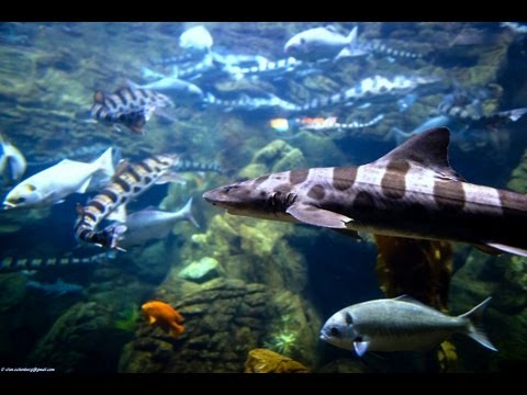 Relaxing 3 Hour Video of Ocean Fish