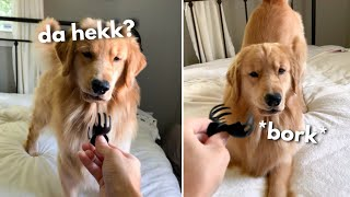 My Dog Reacts to Hair Clip