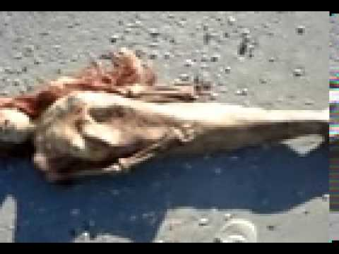 Dead Mermaid Discovered In Florida Youtube