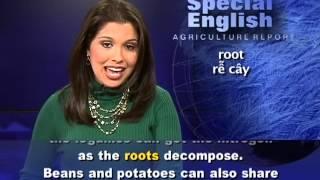 Anh ngữ đặc biệt: Companion Planting/Ripening Fruit