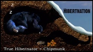 What does Hibernation mean to a Black Bear?