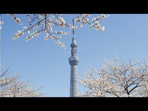 東京スカイツリーと桜 Tokyo Sky Tree & Cherry Blossoms ( Shot on RED EPIC )