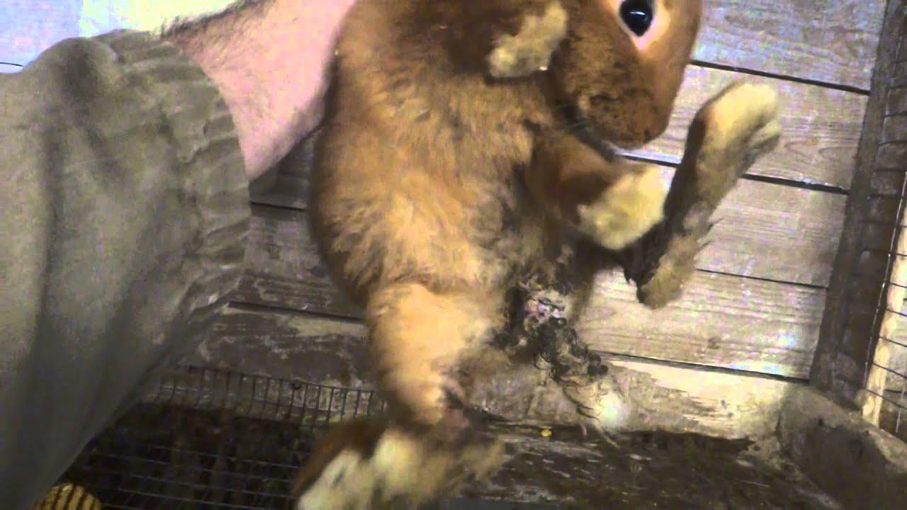 cresterea iepurilor de casa