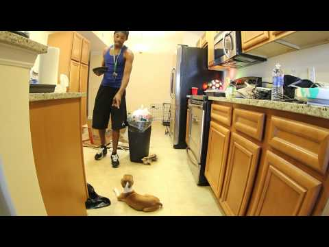 30. DOG AND MOVIES! - [#FCHW]