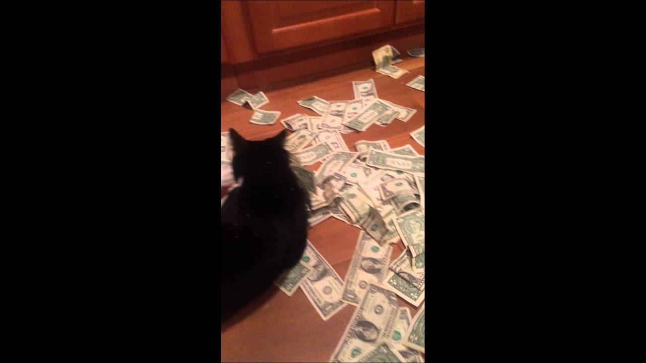 Money Funny Cat Money Shower Cats Cat 2015