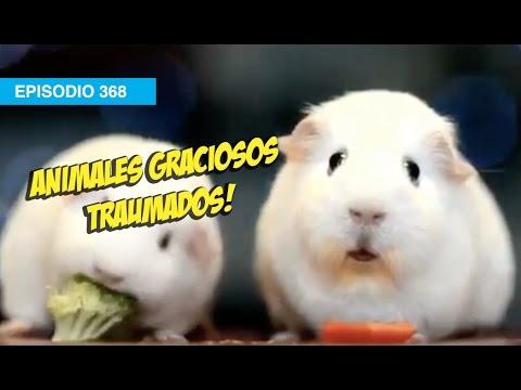 Animales Traumados!! #mox #whatdafaqshow