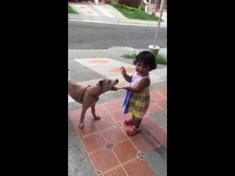 Ataque de pitbull a niña