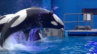 One Ocean (Full Show) January 20, 2018 - SeaWorld Orlando