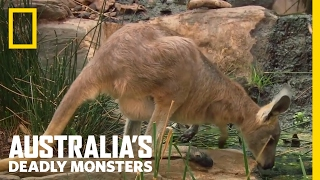 Croc vs. Roo | Australia's Deadly Monsters