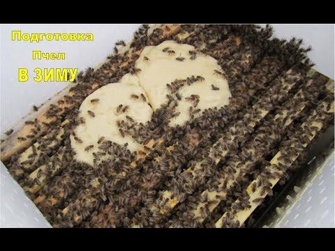Технология подготовки пчел к зимовке - ПАСЕЧНИК УКРАИНЫ