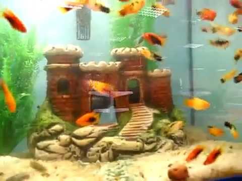Как сделать своими руками декорации для аквариума